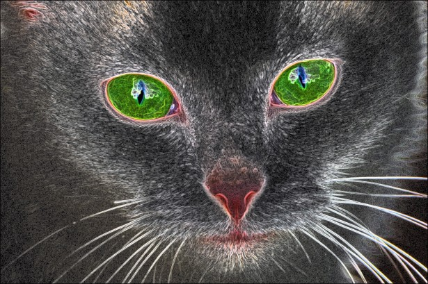Green eyed cat 1418397265jkn